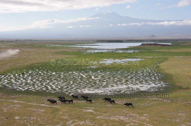 Bufalos-fondo
