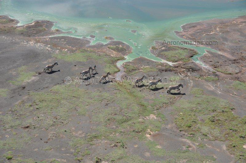 Cebras-Bogoria