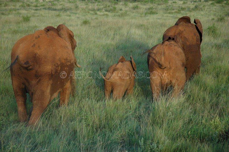 aerea-elefantes