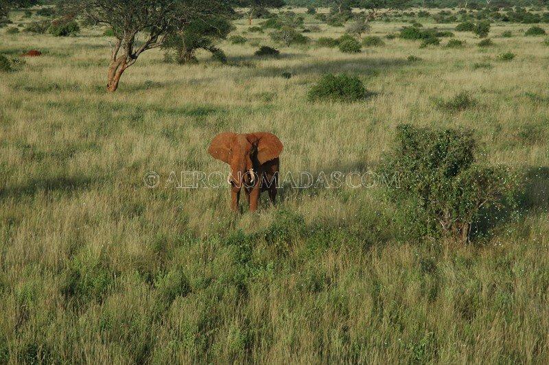 elefante-Tsavo