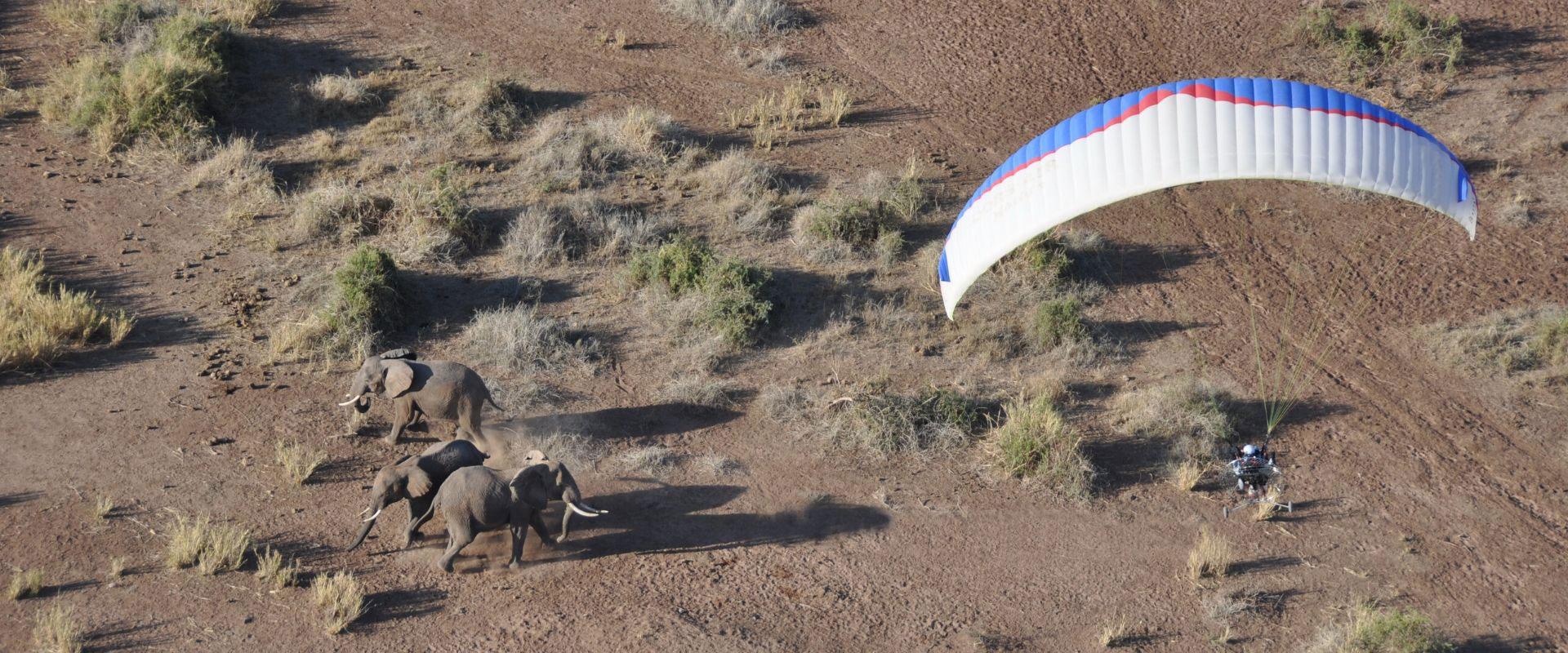 paramotor volando con elefantes